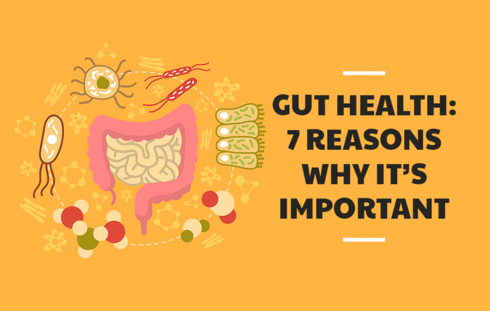 Gut Health 7 Reasons Why It's Important