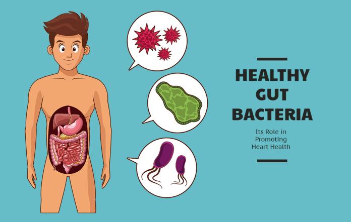 Healthy Gut Bacteria