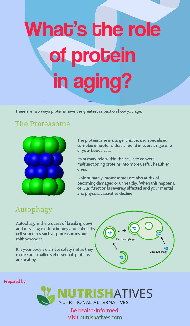 What is the role of protein in aging?