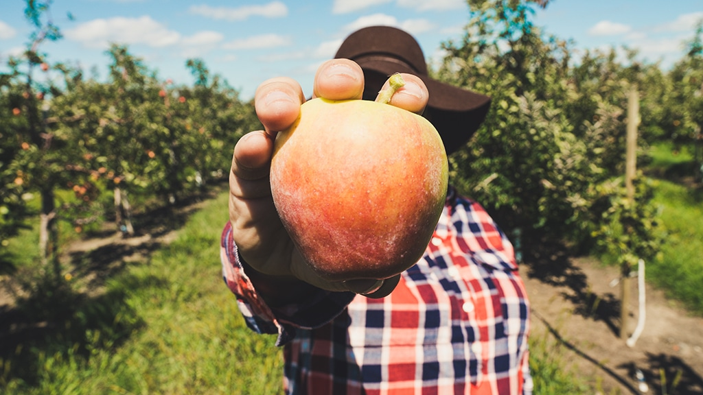 apple cider vinegar and cholesterol