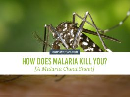How Does Malaria Kill You