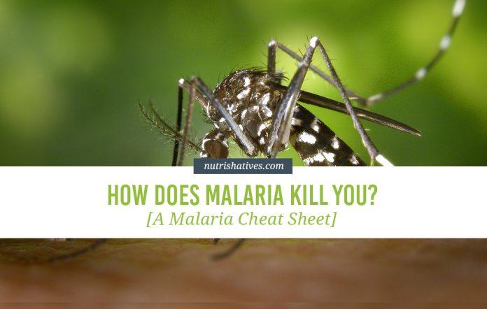 How Does Malaria Kill You