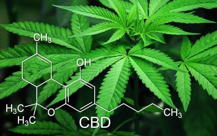Cannabis plant and structure of CBD