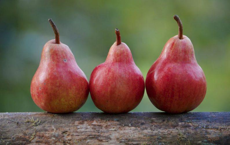 Three pears on a log